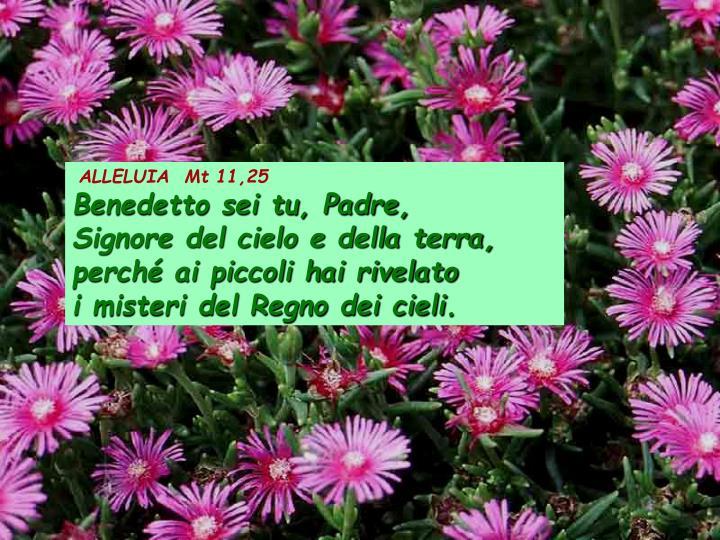 ALLELUIA  Mt 11,25
