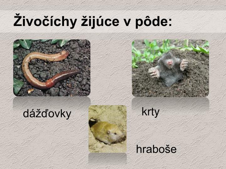 Živočíchy žijúce v pôde: