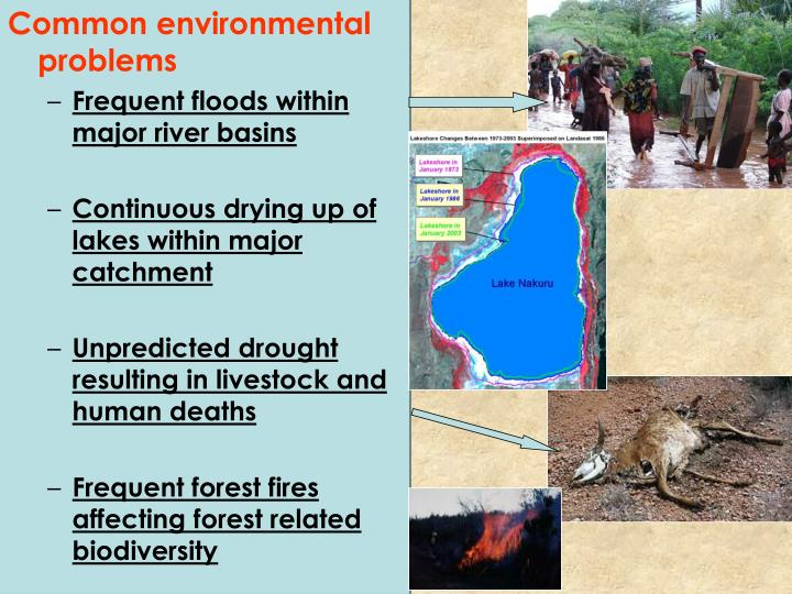 Common environmental problems