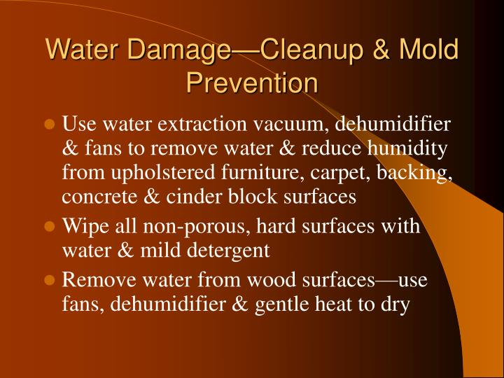 Water Damage—Cleanup & Mold Prevention