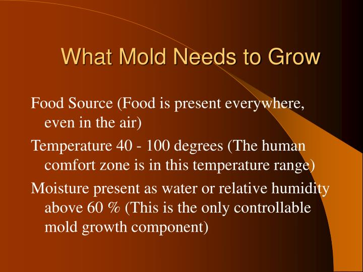 What Mold Needs to Grow