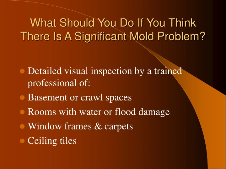 What Should You Do If You Think There Is A Significant Mold Problem?