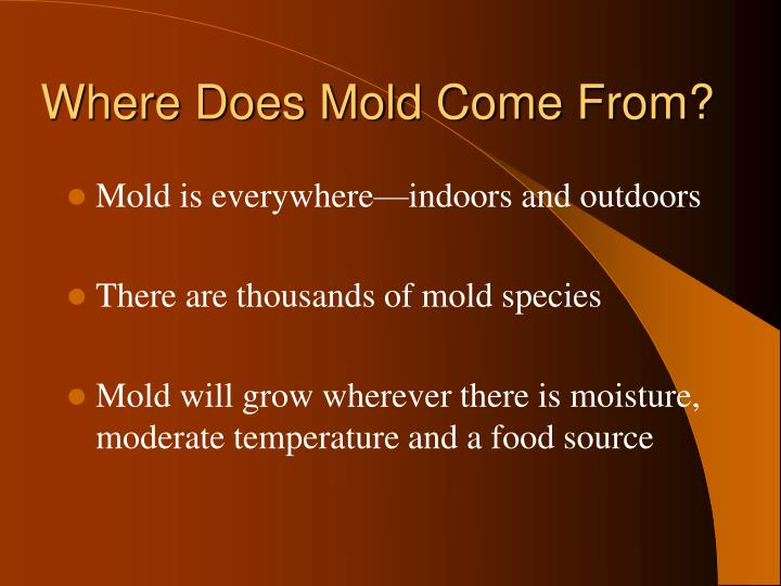 Where Does Mold Come From?