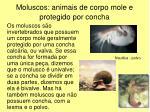 moluscos animais de corpo mole e protegido por concha
