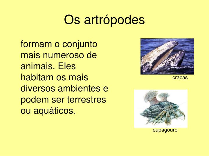 Os artrópodes