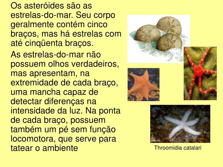 Os asteróides são as estrelas-do-mar. Seu corpo geralmente contém cinco braços, mas há estrelas com até cinqüenta braços.