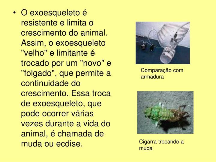 """O exoesqueleto é resistente e limita o crescimento do animal. Assim, o exoesqueleto """"velho"""" e limitante é trocado por um """"novo"""" e """"folgado"""", que permite a continuidade do crescimento. Essa troca de exoesqueleto, que pode ocorrer várias vezes durante a vida do animal, é chamada de muda ou ecdise."""