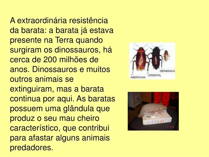 A extraordinária resistência da barata: a barata já estava presente na Terra quando surgiram os dinossauros, há cerca de 200 milhões de anos. Dinossauros e muitos outros animais se extinguiram, mas a barata continua por aqui. As baratas possuem uma glândula que produz o seu mau cheiro característico, que contribui para afastar alguns animais predadores.