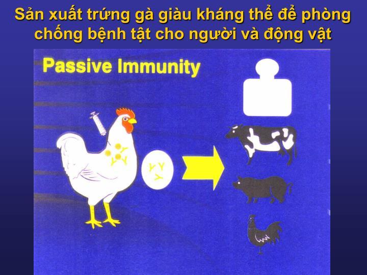 Sản xuất trứng gà giàu kháng thể để phòng chống bệnh tật cho người và động vật