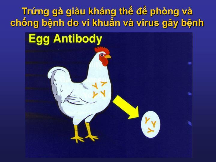 Trứng gà giàu kháng thể để phòng và chống bệnh do vi khuẩn và virus gây bệnh