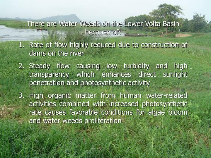 There are Water Weeds on the Lower Volta Basin because of: