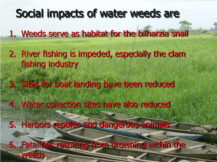 Social impacts of water weeds are