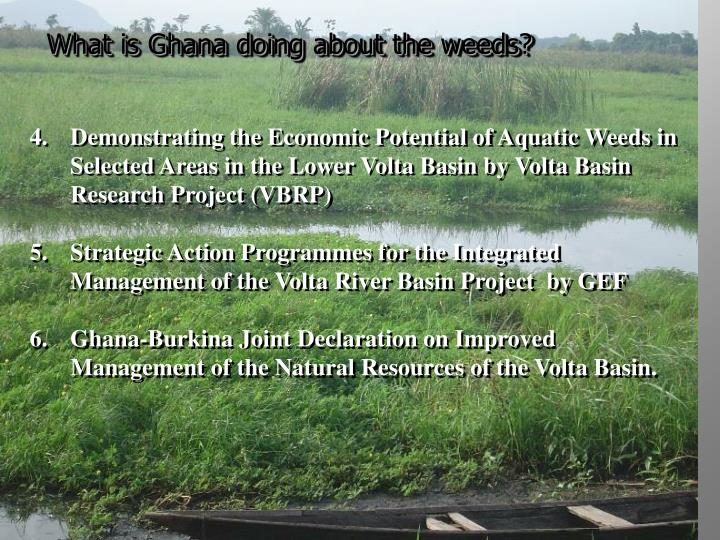 What is Ghana doing about the weeds?