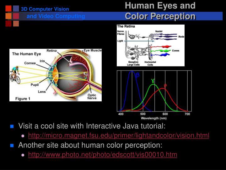 Human Eyes and