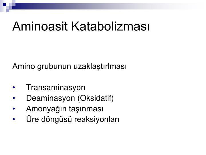 Aminoasit Katabolizması