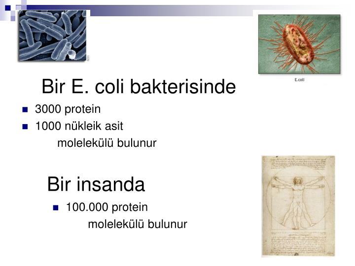 Bir E. coli bakterisinde