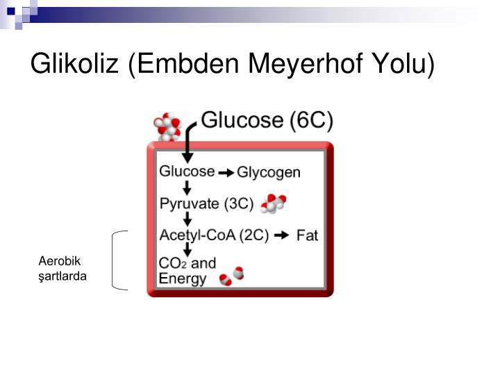 Glikoliz (Embden Meyerhof Yolu)