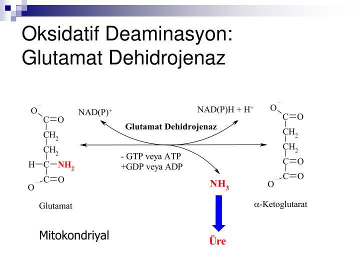 Oksidatif Deaminasyon: