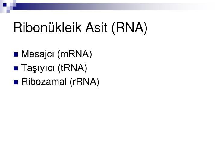 Ribonükleik Asit (RNA)