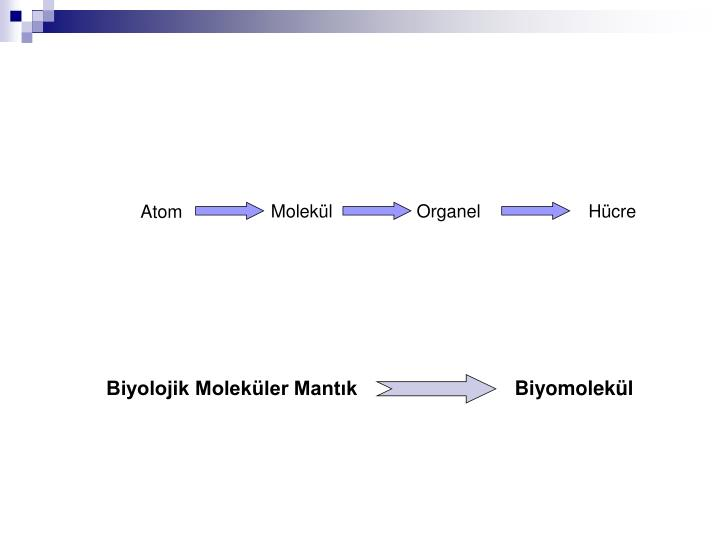 Biyolojik Moleküler Mantık