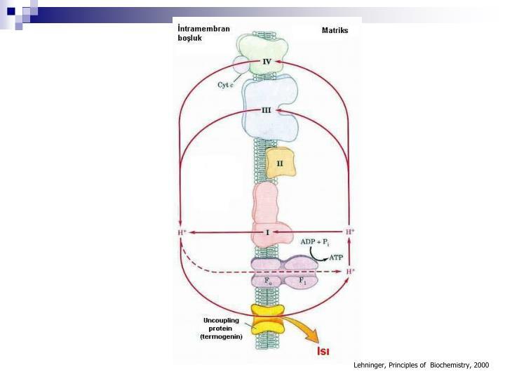 Lehninger, Principles of  Biochemistry, 2000
