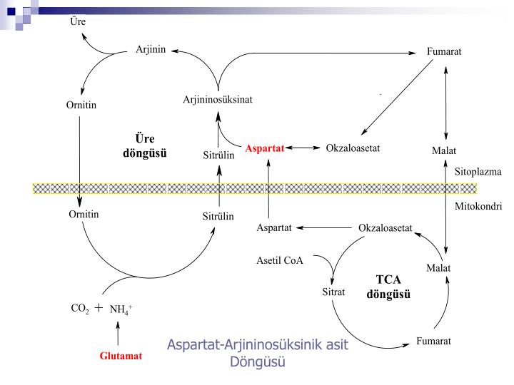 Aspartat-Arjininosüksinik asit