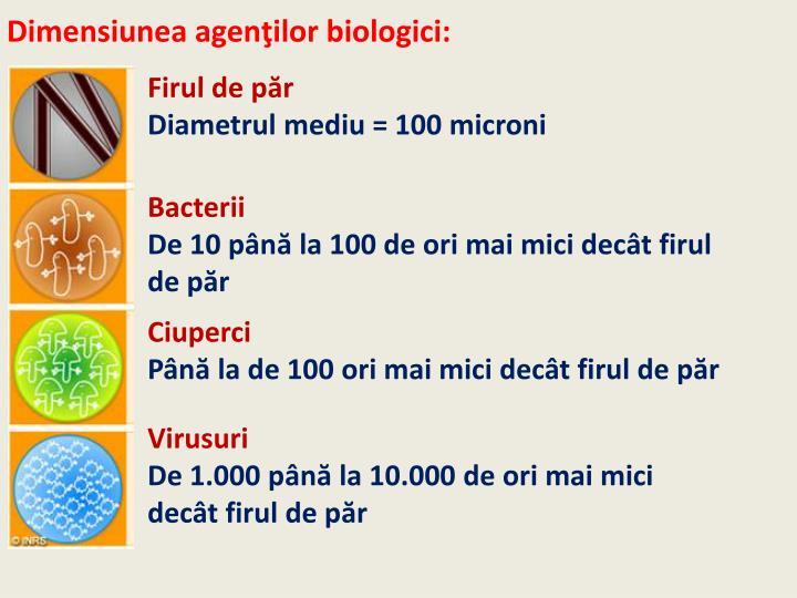 Dimensiunea agenţilor biologici: