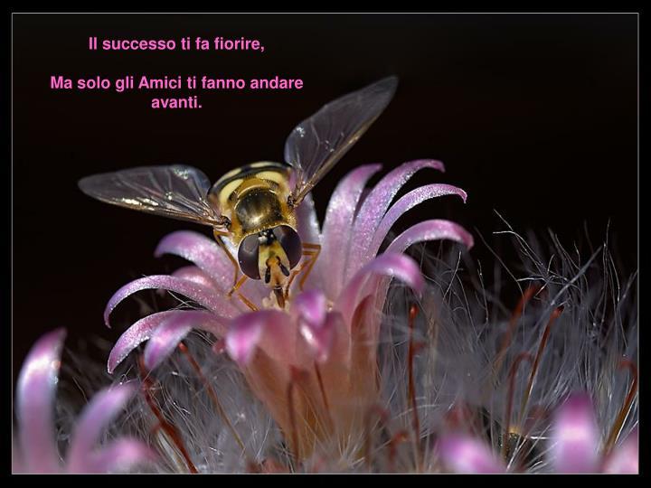 Il successo ti fa fiorire,