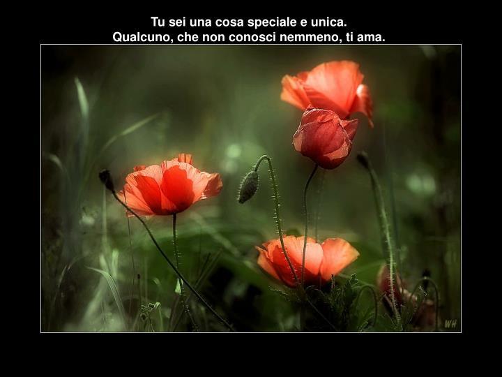 Tu sei una cosa speciale e unica.