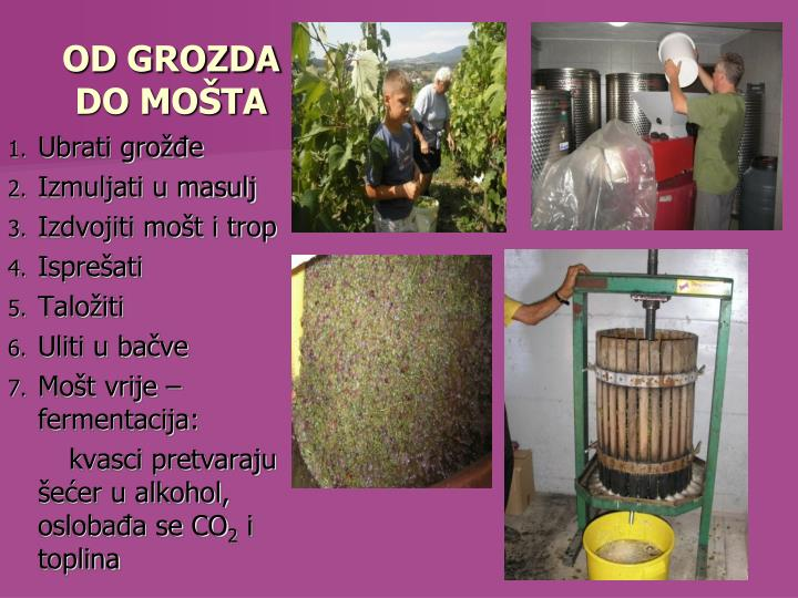 OD GROZDA DO MOŠTA