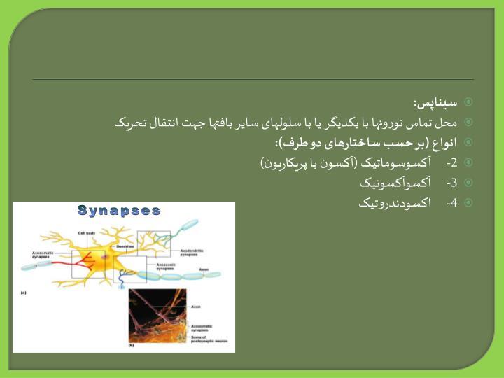 سیناپس: