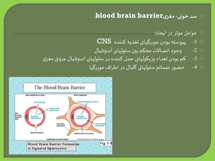 سد خونی- مغزی
