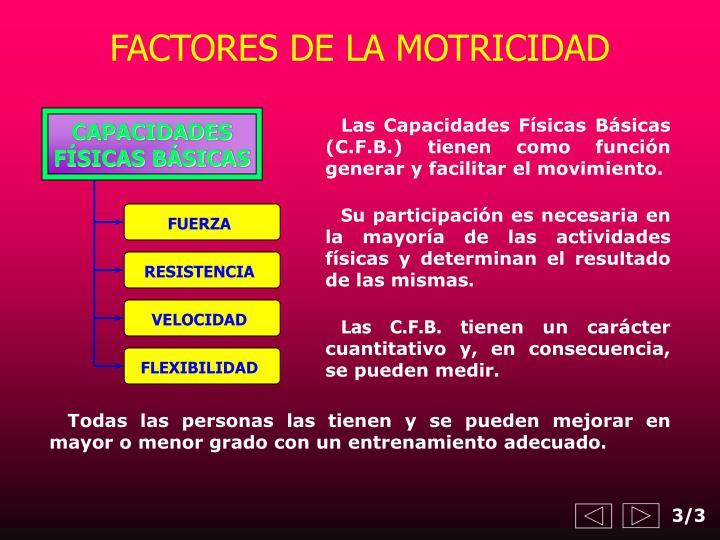 FACTORES DE LA MOTRICIDAD