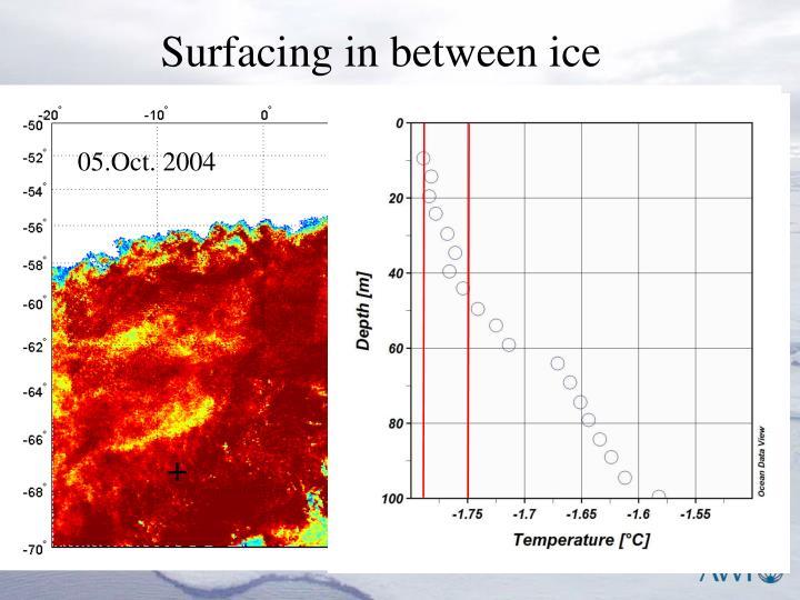 Surfacing in between ice