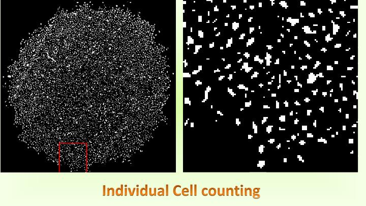 Individual Cell counting