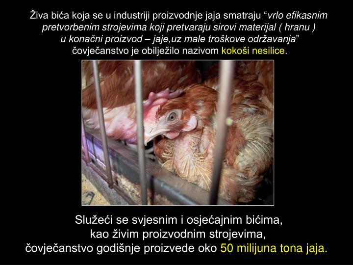 """Živa bića koja se u industriji proizvodnje jaja smatraju """""""