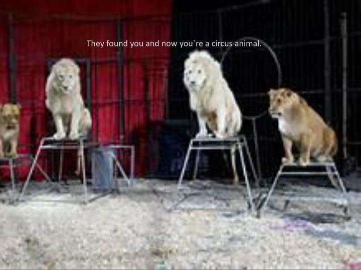 They found you and now you`re a circus animal.