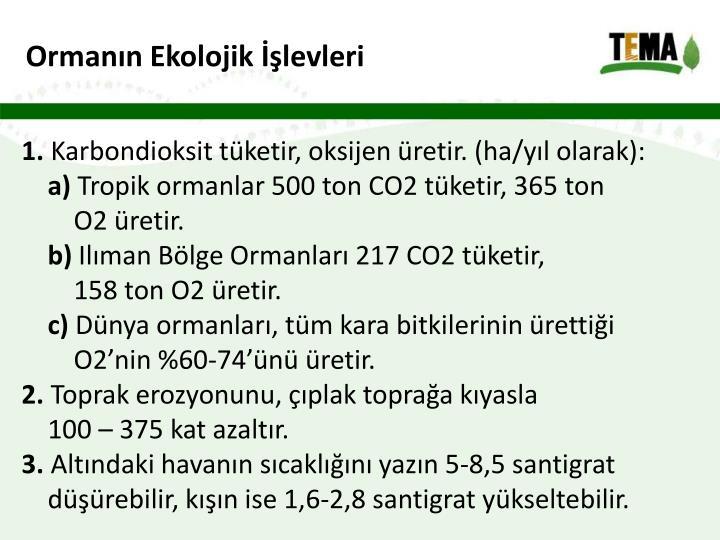 Ormanın Ekolojik İşlevleri