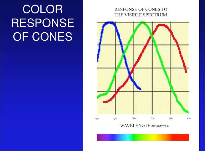 COLOR RESPONSE OF CONES