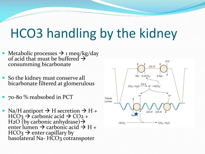 HCO3 handling by the kidney