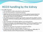 hco3 handling by the kidney1