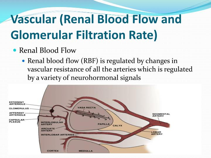 Vascular renal blood flow and glomerular filtration rate