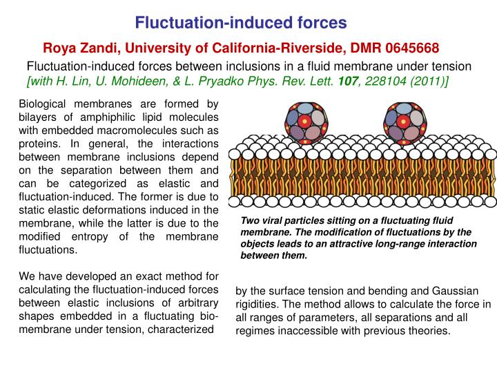 Fluctuation induced forces roya zandi university of california riverside dmr 0645668
