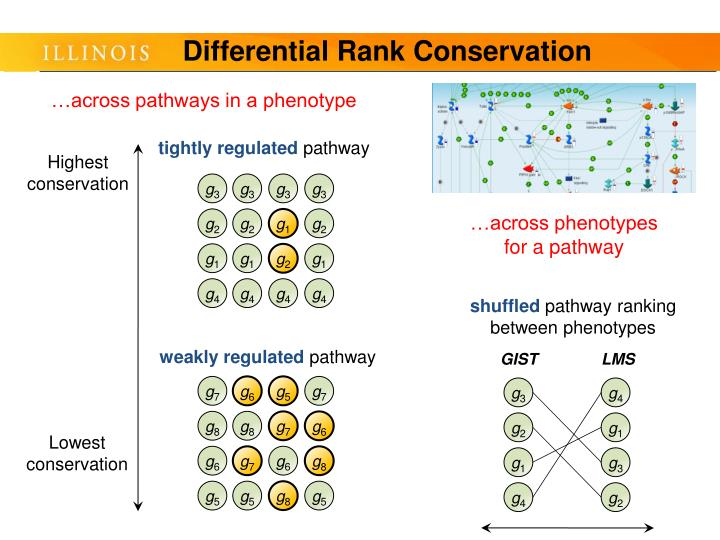 Differential Rank Conservation