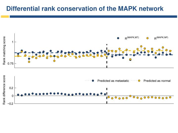 Differential rank conservation of the MAPK network