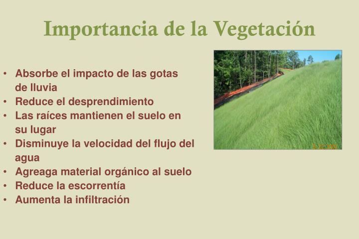 Importancia de la Vegetación