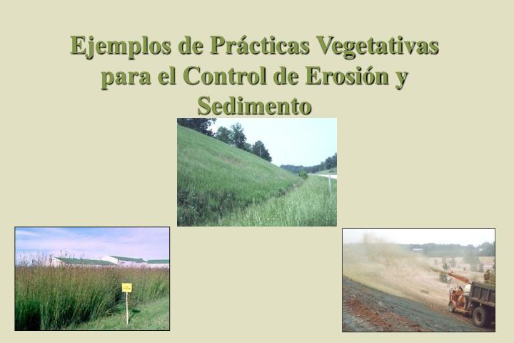 Ejemplos de Prácticas Vegetativas para el Control de Erosión y Sedimento
