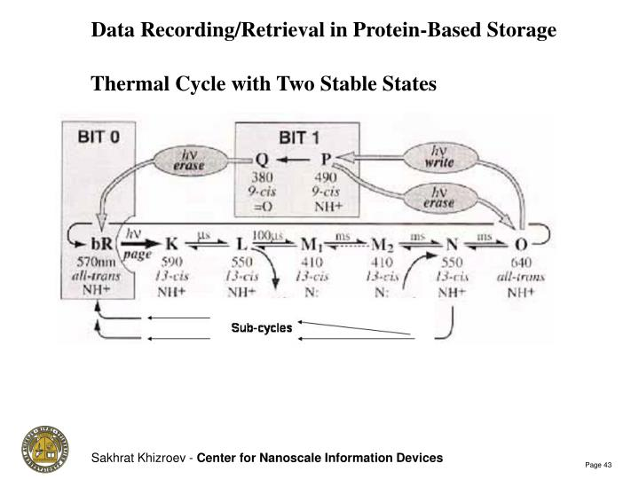 Data Recording/Retrieval in Protein-Based Storage