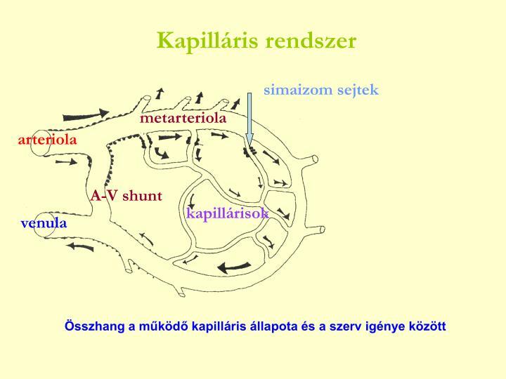 Kapilláris rendszer