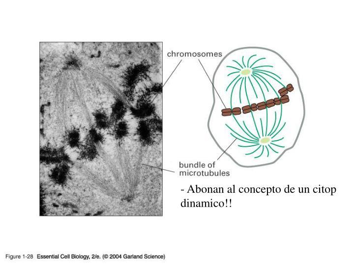 01_28_Microtubules.jpg